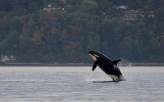 Residents visit Puget Sound for a day