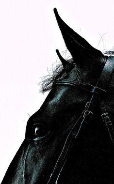 Equine contemporary photography