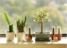 #nastygal #minkpink    combination of bonsai & cactus...mix of Asian cultures with desert environments