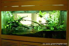 Hi Bros, Anyone keep vivarium tank or seen any vivarium tank in Singapore? I still wavering, should I setup a vivarium project for this tank . Terrariums, Gecko Terrarium, Terrarium Reptile, Aquarium Terrarium, Planted Aquarium, Terrarium Ideas, Frog Tank, Reptile House, Houses