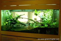 6ft vivarium