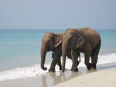 elephants at the beach