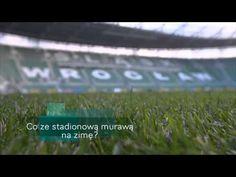 Trawa na Stadionie Wrocław!!!