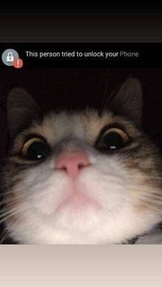 Funniest Cat Memes, Cute Cat Memes, Funny Animal Memes, Funny Cats, Funny Animals, Cute Animals, Cat Memes Clean, Catholic Memes, Memes Of The Day