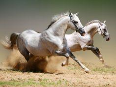 Los agujeros de la vida: caballos salvajes                              …