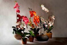 A Loja do Gato Preto | Plantas @ Plants