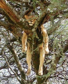 Didn't get coffee yet? Hang in there, my friend... :-)