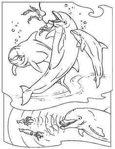 Three Dolphin Hunting With Sonar Sea Animals Coloring Page