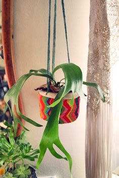 Plant-a-colada: easy DIY planters from coconuts!