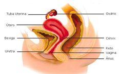 Aula de Anatomia | Sistema Genital Feminino