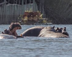 Caprivi Strip e Ngepi Camp Camping, Animals, Campsite, Animales, Animaux, Animal, Animais, Campers, Tent Camping
