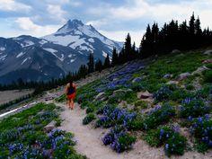 pacific crest trail oregon Google search- Gorgeous!