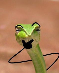 Snakes With Arms Drawn On Make The World A Better Place - World's largest collection of cat memes and other animals Funny Animal Jokes, Cute Funny Animals, Animal Memes, Cute Cats, Snake Meme, Snake Funny, Cat Memes, Funny Memes, Snake Photos