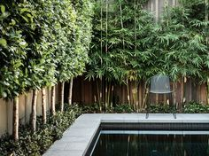 If you are working with the best backyard pool landscaping ideas there are lot of choices. You need to look into your budget for backyard landscaping ideas Privacy Trees, Yard Privacy, Outdoor Privacy, Privacy Screen Plants, Indoor Outdoor, Privacy Blinds, Blinds Diy, Sheer Blinds, Fabric Blinds