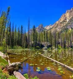redfish lake lily pond --- I named my daughter after this place