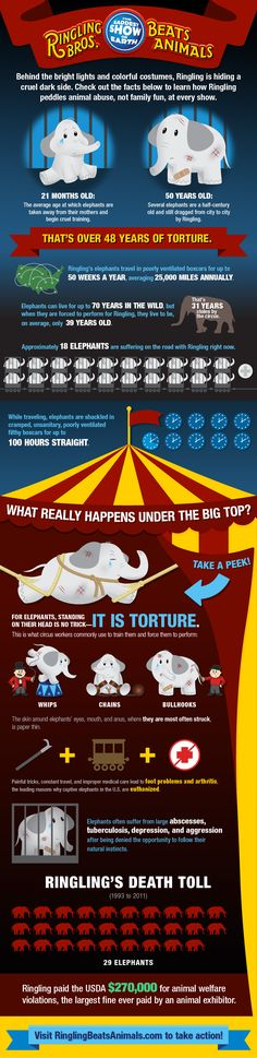Check out this infographic on Ringling's cruelty.  Speak to students about why they should boycott any circus that uses animals! #infographic #humaneeducation #circus
