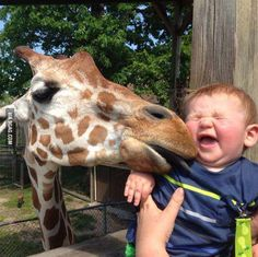 Let's go the zoo, they said. It'll be fun, they said.