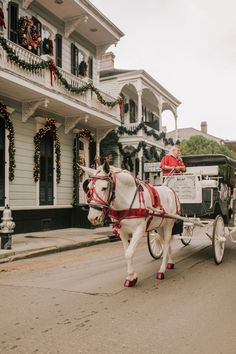 Christmas in New Orleans – Kelly in the City New Orleans Christmas. Horse drawn carriage in New Orleans New Orleans Christmas, Southern Style, Southern Charm, Cozy Christmas, Hallmark Christmas, New Orleans French Quarter, Horse Carriage, New Orleans Louisiana, Dreams Do Come True