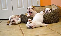 Sleepy puppies! Me on any given Monday!