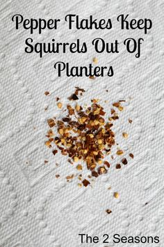 Rose Gardening Pepper Flakes Keep Squirrels out of Planters ~ How simple is that? - If you are having trouble keeping squirrels out of your planters and pots, sprinkle pepper flakes in the soil right after planting your seasonal flowers. Garden Bugs, Garden Pests, Lawn And Garden, Garden Whimsy, Herbs Garden, Fruit Garden, Garden Care, Garden Fertilizers, Garden Types