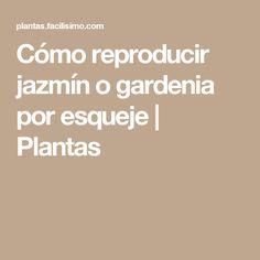 Cómo reproducir jazmín o gardenia por esqueje | Plantas