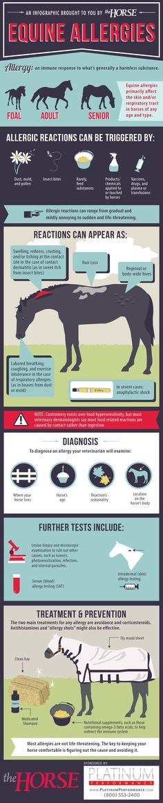 Equine Allergies