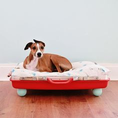 DIY dog bed from a vintage suitcase! Diy Projects For Dog Lovers, Animal Projects, Vintage Suitcase Decor, Vintage Suitcases, Cute Suitcases, Diy Dog Bed, Ideas Geniales, Dog Hacks, Pet Beds