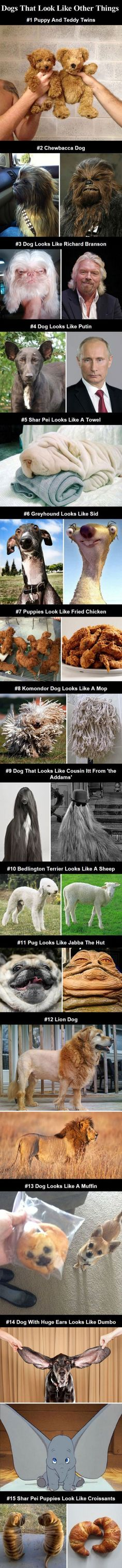 Dogs That Look Like Other Things cute animals dogs adorable dog puppy animal pets lol puppies humor funny pictures funny animals funny pets funny dogs