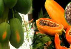 Start Eating Papaya Seeds Right Now – There Are Magical Cure For Gut, Liver, Kidney, Cancer