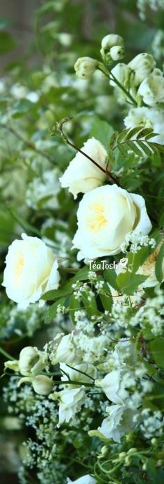 ❈Téa Tosh❈ The beautiful flowers by Philippa Craddock include white peonies, white foxgloves, white stocks, flowering birch, beech, hornbeam, lily of the valley & blue delphiniums… expected to have cost thousands. Prince Harry and Meghan Markle are...