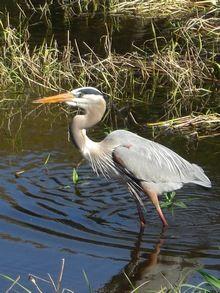 Presqu'ile Park on the shore of Lake Ontario is an important birding area