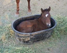 Baby in a Bucket | Beautiful Horse Pictures......aaawwwww!