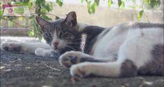 ¿Sabes la importancia de la esterilización de tus mascotas? https://www.facebook.com/realmerida/videos/327944070663025/