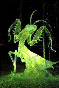 An ice sculpture of a praying mantis was one of the features of the 2007 World Ice Art Championships in Fairbanks, Alaska. This 2008 contest gets underway this week.