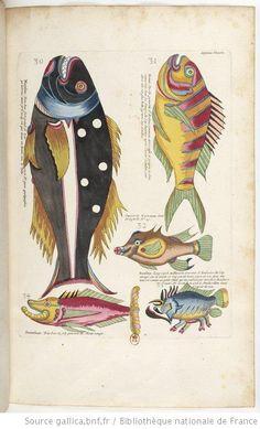 More colorful fish. Look at the teeth on the black one!  Poissons, écrevisses et crabes de diverses couleurs et figures extraordinaires que l'on trouve autour des îles Moluques et sur les côtes des terres australes... ouvrage... divisé en deux tomes dont le premier a été copié sur les originaux de M. Baltazar Coyett,... le second tome a été formé sur les recueils de M. Adrien Van der Stell,... - 70