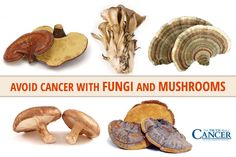 It might sound ludicrous to say you can beat cancer with mushrooms but, rest assured, there are legitimate scientific studies to back up this statement. No matter what type or stage of cancer appli…