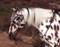 Another beautiful appy (: