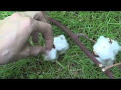 Real cotton, and pinecones. I spent a little time outside with some natural objects. ASMR http://www.youtube.com/missmindbuzz