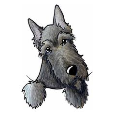 Brindle Scottie Terrier Dog Art Original Drawing ACEO (¥4,780) ❤ liked on Polyvore featuring animals