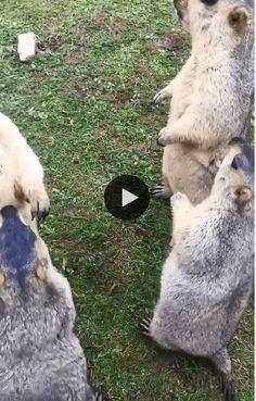 efco Clear Stempel-Set Zoo