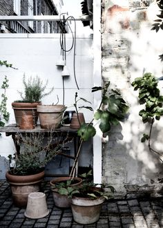 in the world of pretty patio style, with some simple ideas for getting your own balconies, courtyards or gardens ready for summer. Garden Deco, Balcony Garden, Garden Plants, Indoor Plants, Terrace, Potted Garden, Potted Plants, Decoration Plante, Garden Inspiration