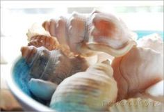 Sea inspired print  beach theme  sea shells still by NewCreatioNZ