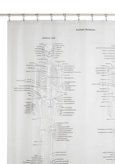 This is going to be my new shower curtain soon! <3 Anatomy was one of my favorite classes!