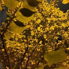 もうすっかり秋の色駿河台にて