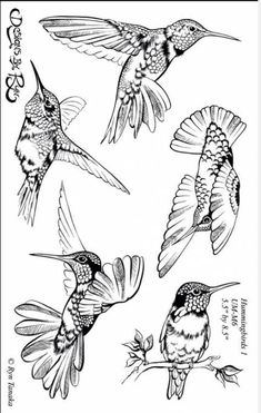 36 Ideas Humming Bird Sketch Hummingbird Drawing For 2019 Bird Drawings, Animal Drawings, Drawing Sketches, Drawing Birds, Colouring Pages, Adult Coloring Pages, Hummingbird Drawing, Hummingbird Tattoo Black, Bird Sketch