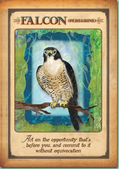 °Falcon (Peregrine) ~ Act on the opportunity before you & commit to it without equivocation.