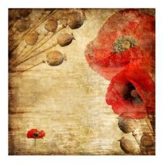Poppy Flower Graphic Art Print on Canvas East Urban Home Size: 80 L x 80 W Star Wallpaper, Embossed Wallpaper, Print Wallpaper, Photo Wallpaper, Amazing Wallpaper, Wallpaper Murals, Tulip Painting, Painting Prints, Flower Graphic
