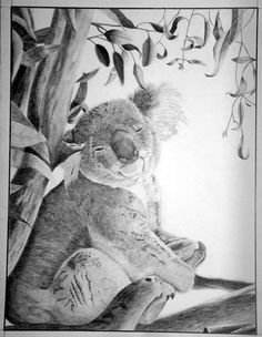 Koala..... It means: drink less... Because the most of their moisture comes out of the leaves they eat... Only at time of heatwaves they need more fresh water...