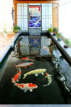 An aerator is far more economical than a pond heater, and it'll oxygenate the water whilst reducing ice develop. In addition, there are pond heaters it is possible to place right into the pon… Indoor Pond, Indoor Water Garden, Outdoor Ponds, Ponds Backyard, Fish Pond Gardens, Koi Fish Pond, Koi Carp, Fish Ponds, Aquaponics Fish
