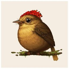 Mike Mitchell - Royal Flycatcher http://www.sirmitchell.com/